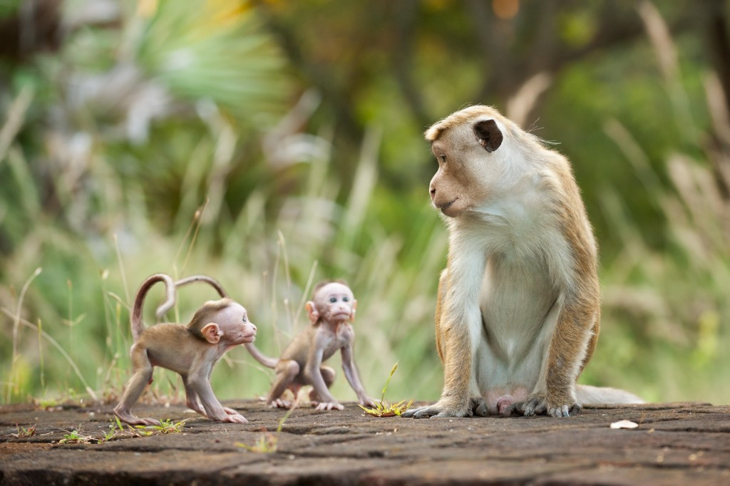 "Review: ""Monkey Kingdom"""